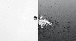Ganadores de los premios internacionales de fotografía de Siena 2016