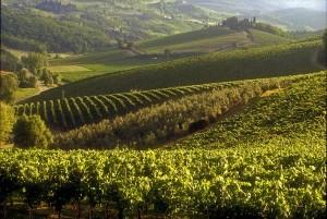 Viñedos de Castello d'Albolla, cerca de Radda in Chianti